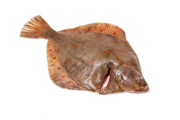 Plaice fish isolated on a white studio background.
