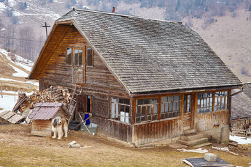 Wooden house guarded by shaggy dog