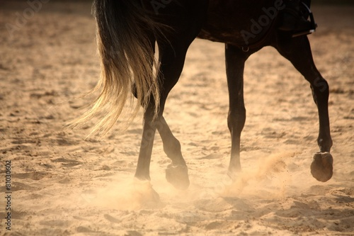 Plexiglas Paardrijden Trotting away horse legs close up
