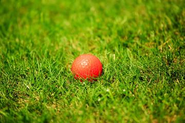 Orange golf ball on the green