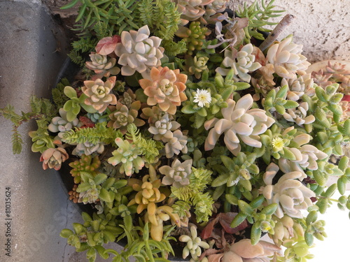 Papiers peints Cactus 多肉植物の寄せ植え鉢