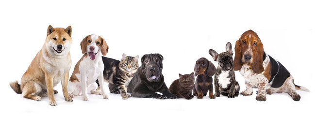 Group of dogs sitting in front of a white background..