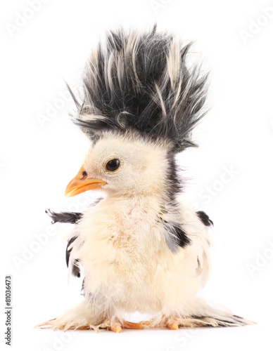 Tuinposter Kip Crazy chick with even crazier hair