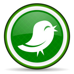twitter green icon