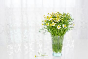 可愛いカモミールの花