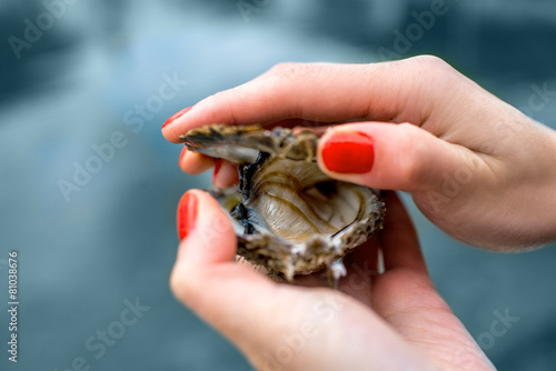 Oyster in hands - 81038676