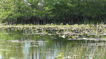 Everglades swamp in Florida native vegetation 4 K