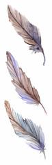 Feathers set isolate