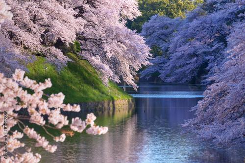 Fotobehang Tokyo 朝の千鳥ヶ淵の桜