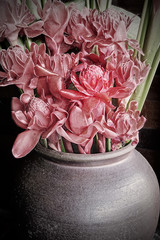 Art picture torch ginger in jar