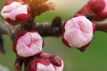 Spring bud.