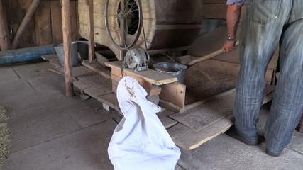 farmer work with manual grain cleaner harp in village barn