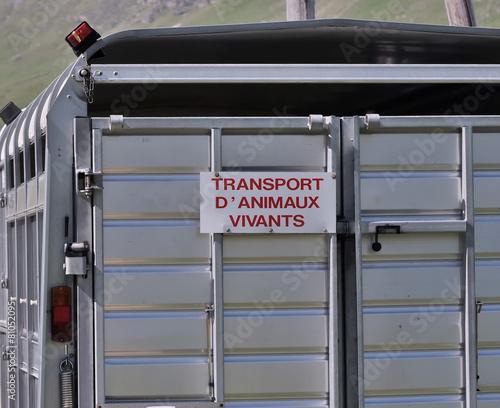 Fotobehang Schapen bétaillère sur la route