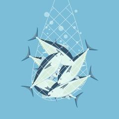Fishing nets bluefin tuna