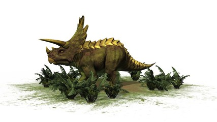 Triceratops Dinosaur - seperated on white background