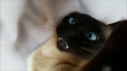 Cat in slow motion