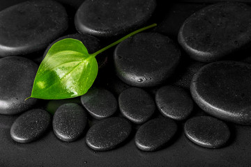 spa concept of green leaf Calla lily on black zen stones with de