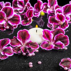 beautiful spa concept of blooming dark purple geranium flower, b