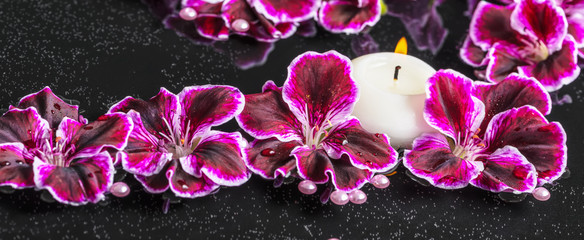 beautiful spa concept of blooming dark purple geranium flower, b
