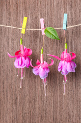 fuchsia flowers handing on rope with colorful clothespin on wood