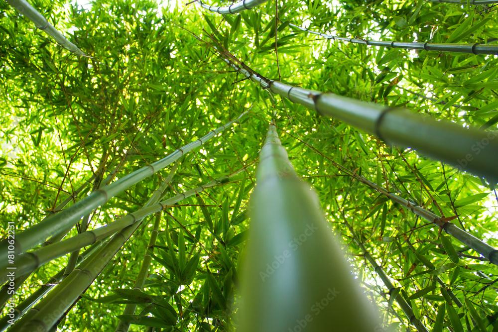 bambus roślina zielony - powiększenie
