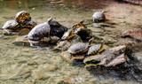 Water tortoises outdoors. Malaga, Spain