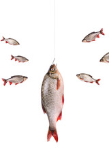 Fishes and fish on a hook,  isolated on white, clipping path