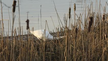 Swan Nest Building
