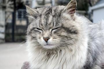 Very fluffy cat