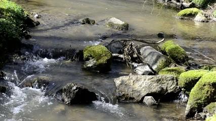 ruissseau et pierres en forêt
