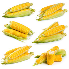Set of fresh sweet corn