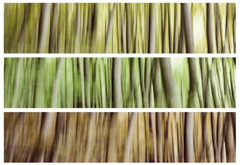 Composizione di alberi