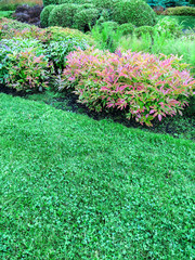Decorative plants and green lawn