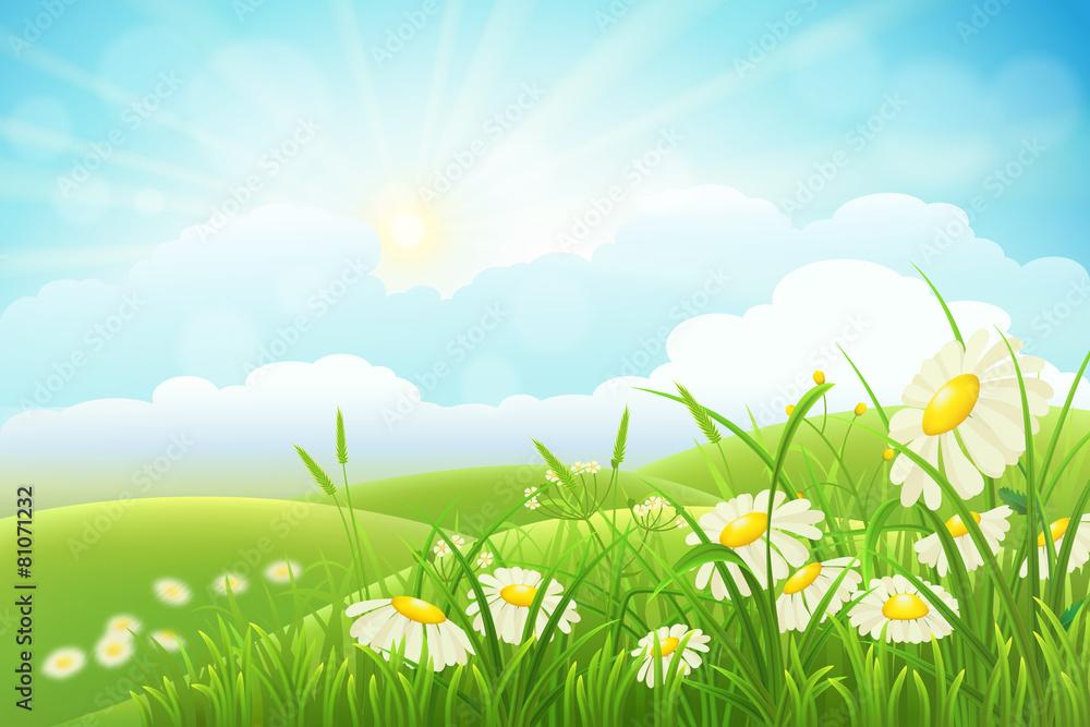 kwiat słońce lato - powiększenie