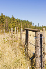 Barb wire and wood post fence