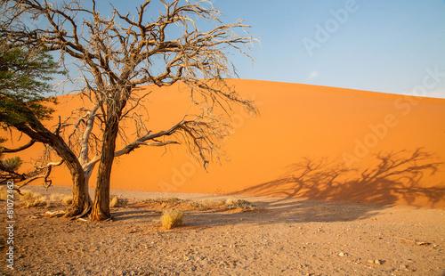 Naklejka Desert landscape