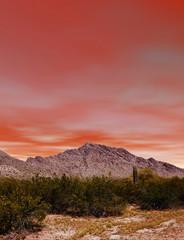 Sunset Sonora Desert