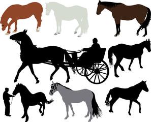 Horses vector silhouette