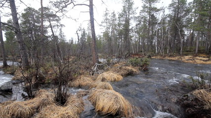 Typical taiga river