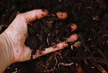 compost,terreau bio,décomposition avec des vers