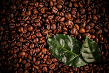 Coffee beans with fresh leaves