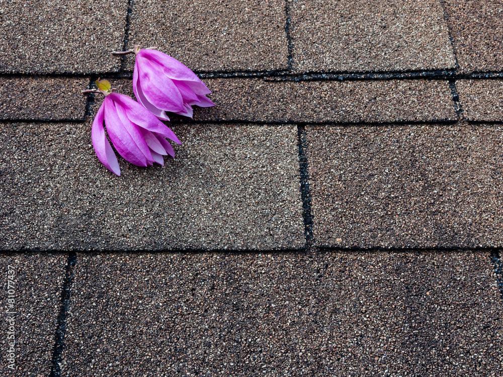 asfalt magnolia kwiat - powiększenie