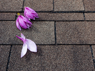 Pink and purple magnolia flowers on asphalt shingles roof
