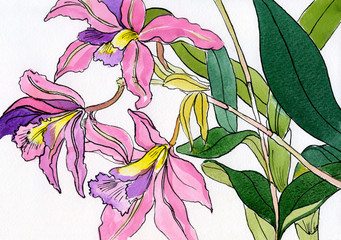 watercolor painting of a bouquet of a lilac-pink orchids