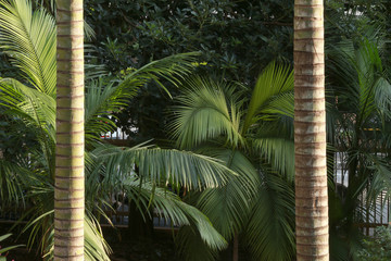 palm leaf and trunk