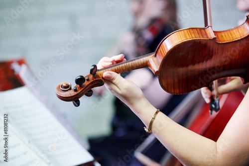 violin player musician - 81081232