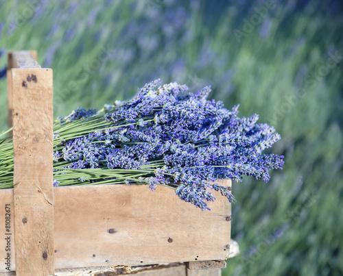 Papiers peints Lavande Bouquet of lavender flowers