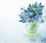 Blue muscari flowers - 81082800