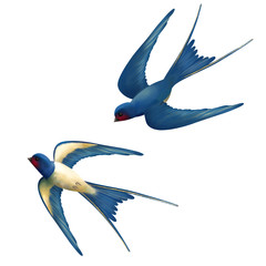 Vector Flying Swallows