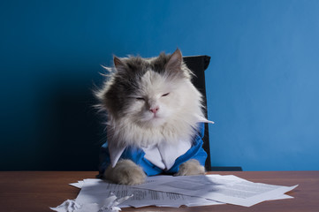 cat manager in a suit sitting in the office